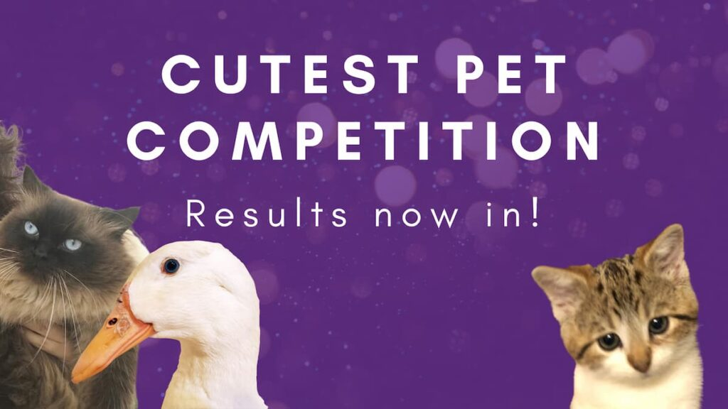 Cutest Pet Competition Results